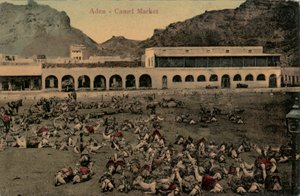 Camel Market, Aden (small)